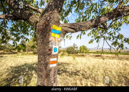 Podyji National Park, Signs for hiking on the bark of a tree , Czech Republic - Stock Image