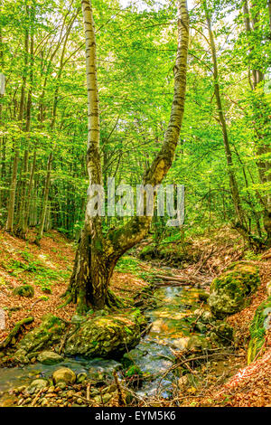Stream deep in mountain forest. Nature composition. - Stock Image