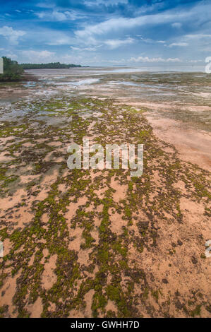 Vertical landscape of seaweed on the beach leading to the ocean. Africa. - Stock Image
