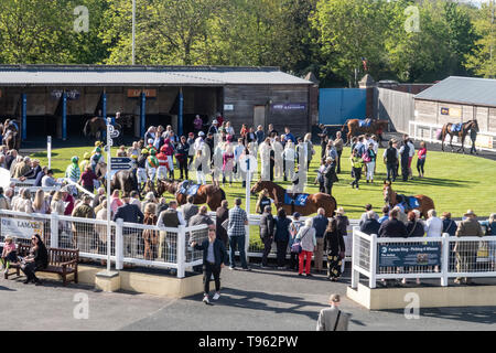 The Parade Ring at Newton Abbot horse racing course, Devon, UK. - Stock Image