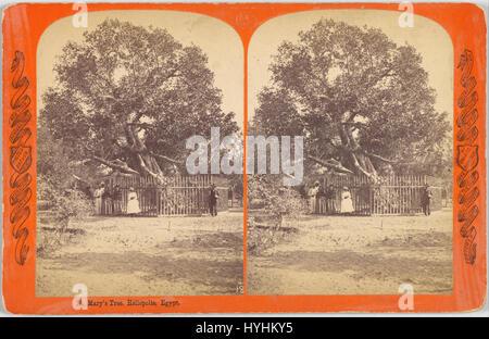 Charles Bierstadt (American, born Germany   Mary's Tree. Heliopolis, Egypt.   Google Art Project - Stock Image