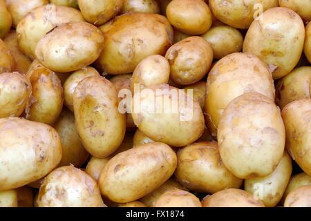Fresh young potatoes. - Stock Image