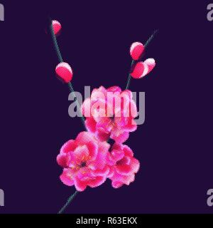 Branch with delicate pink flowers and buds. Sakura points. isolated on dark purple background. illustration - Stock Image