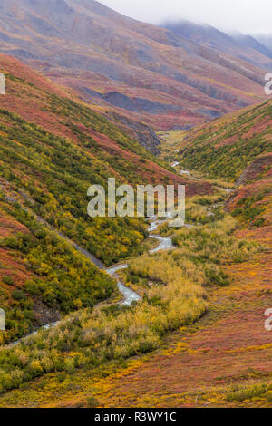 USA, Alaska, Brooks Range. Tundra in fall color. - Stock Image