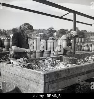 1950s, historical, at the docks, women sorting recently caught fish laid out on ice in a wooden trough, Northern Ireland. - Stock Image
