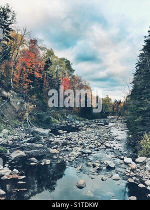 Autumn trees along the stream - Stock Image