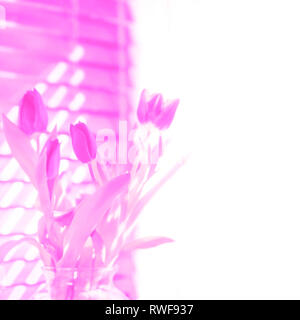 Pink tulips in bloom spring Easter background soft focus for springtime, Mother's Day, love, romance. - Stock Image