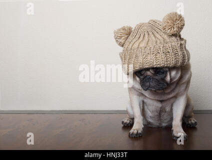cute little pitiful sad pug puppy dog, sitting down on wooden floor - Stock Image