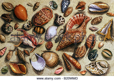 Seashell Medley in Sand - Stock Image