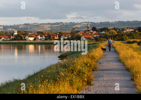 Man walking towards Combwich with dog on footpath beside the River Parret on a summer's evening. - Stock Image