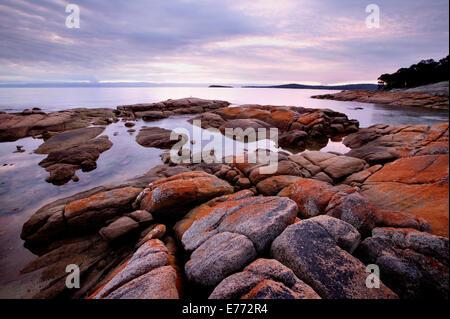 Rocky shoreline Tasmania Australia - Stock Image