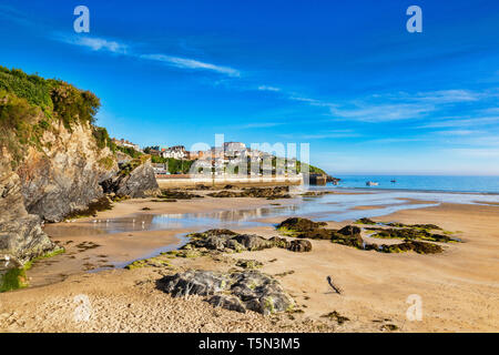 Towan Beach and Towan Head, Newquay, Cornwall, UK, before the crowds arrive, during the summer heatwave. - Stock Image
