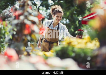 Smiling female florist arranging display at sunny storefront - Stock Image