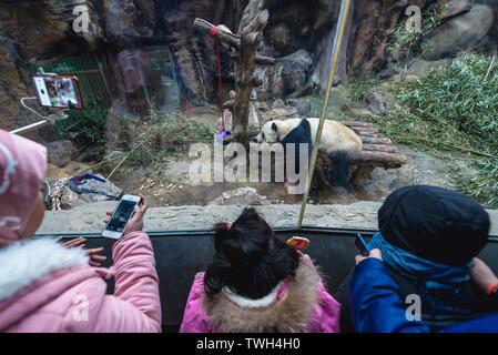 Tourists watching panda bear in Panda House in Beijing Zoo in Beijing, China - Stock Image