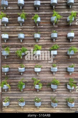 Planters on a wall - Stock Image