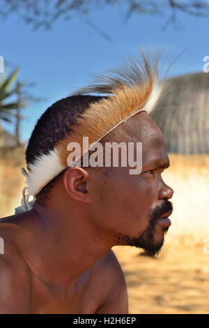 Shakaland Zulu male troupe member poses in his traditional head dress , Shakaland Cultural Village, Shakaland - Stock Image