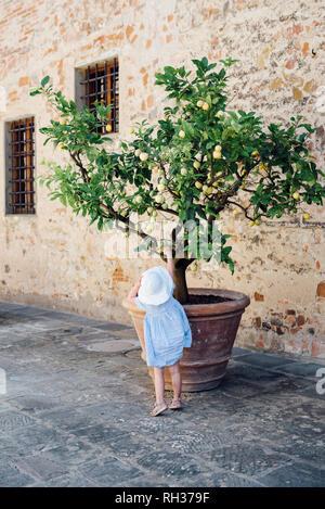 Girl reaching lemon on lemon tree - Stock Image