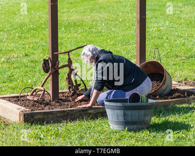 LIMESTONE, TN, USA-4/26/19:  Senior woman digging in flower box, with rusted old tricycle as an ornament. - Stock Image