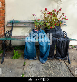 Roses,Growing,in,Old,Denim Jeans,Novelty Flowerpots - Stock Image