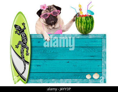 bikini babe pug dog with blue vintage wooden beach sign, surfboard and summer watermelon cocktail, isolated on white - Stock Image