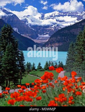 Lake Louise and the Victoria Glacier, Banff National Park,Alberta, Canada - Stock Image