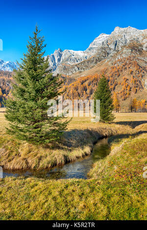 Autumn colors in the valley with two pines in foreground, snowy mountains and blue sky in background - Stock Image