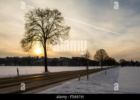 A snowy field at sunset - Stock Image
