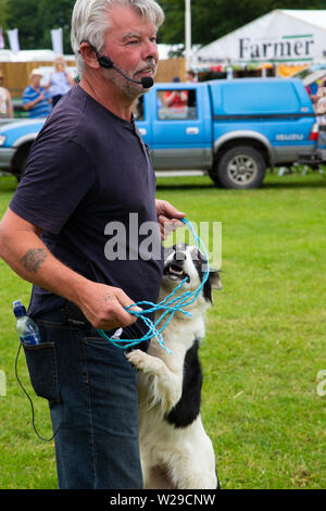 90th Kent County Show, Detling, 6th July 2019. A farmer and game presenter gets ready to send his sheep dog around a jump course. - Stock Image