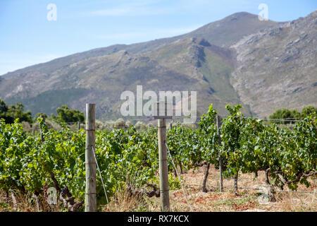 Grande Provence Vines in Franschhoek - South Africa - Stock Image