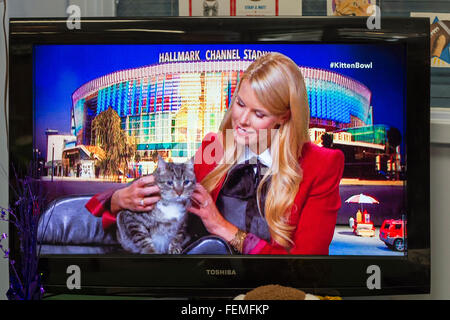 Wantagh, New York, USA. 7th February 2016. Host BETH STERN is holding tabby cat ALEXANDER, the Mayor of Last Hope - Stock Image