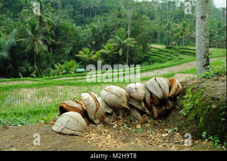 Coconut husks used for fire fuel, Bali, Indonesia - Stock Image