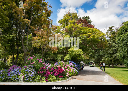 8 January 2019: Christchurch, New Zealand - Tourists taking photos at the colourful hydrangeas in the Botanic Gardens, on a beautiful summer day. - Stock Image