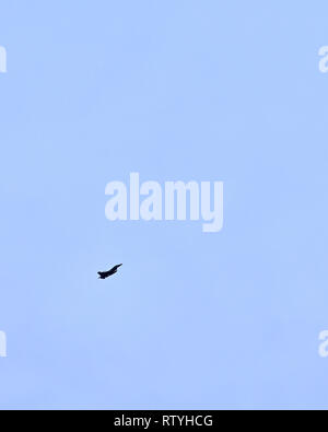 USAF F-16 Fighting Falcon jet aircraft or fighter jet, flying against a solid blue sky, in silhouette with copy space in the USA. - Stock Image