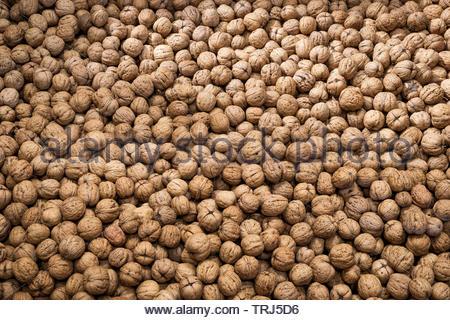 Walnut - Stock Image