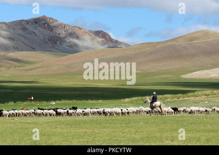 A nomad on horseback and his herd of sheep and goats on the steppe. Mongolia - Stock Image