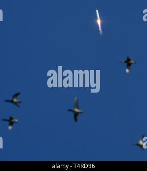 A flock of birds pass as the Northrop Grumman Antares rocket, with Cygnus resupply spacecraft onboard, blasts off from Pad-0A at the NASA Wallops Flight Facility April 17, 2019  in Wallops, Virginia. The commercial resupply cargo mission will carry 7,600 pounds of science and research, crew supplies and vehicle hardware to the International Space Station. - Stock Image