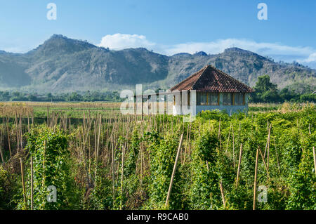 A cabin in the middle of a farm with beautiful mountain views - Stock Image