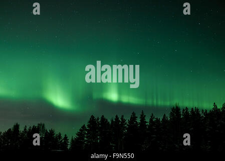 Green northern lights in the sky above trees - Stock Image