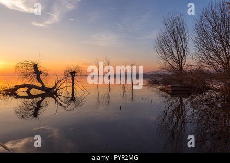 Beautiful sunset at Trasimeno lake (Umbria), with perfectly still water, skeletal trees and beautiful warm colors - Stock Image