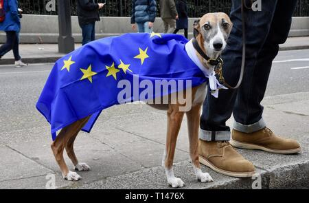 London, UK. 23rd March, 2019. Dog wearing an EU Flag , People's Vote March, Piccadilly, London. UK Credit: michael melia/Alamy Live News - Stock Image