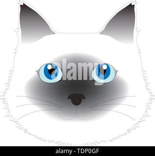Birman cat, computer graphics, cg, vector, vectors - Stock Image