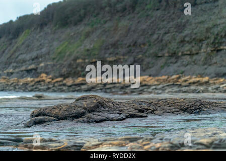 Upper Jurassic Clay Formations at Kimmeridge Bay in Dorset UK - Stock Image