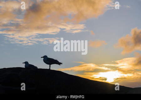 Two seagulls on a curved wall silhouetted against a blue sky at sunrise - Stock Image
