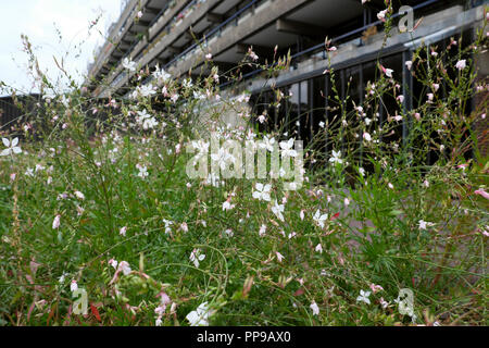 White flowers outside Barbican Estate apartment building in the City of London, London EC2 England UK  KATHY DEWITT - Stock Image