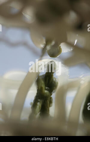 Blurred figurine of a soldier entangled in snares. - Stock Image