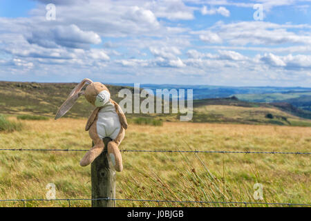 Harry relaxing on fence in Peak District - Stock Image