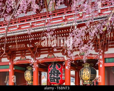 Cherry blossom at Senso-ji Buddhist Temple in Tokyo, Japan - Stock Image