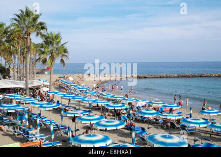 Pay beach with parasols and seats at Sestri Levante, Liguria, Italy - Stock Image