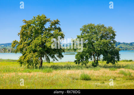 botany, to gauge sth., racks, Schwyz, Switzerland, Additional-Rights-Clearance-Info-Not-Available - Stock Image