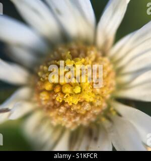 Macro flower - Stock Image
